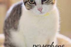 Persephone1