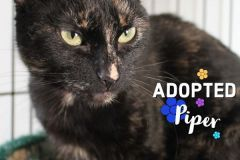Piper-Adopted-on-May-2-2020