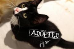 Piper11