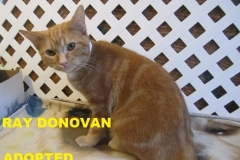 Ray Donovan - Adopted - February 15, 2018 with Abby