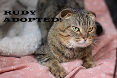 Rudy - Adopted on February 27, 2019