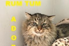 Rum Tum - Adopted - February 24, 2018