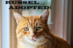 Russel - Adopted on November 3, 2018 with Norman