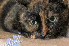 Sadie-Adopted-on-July-23-2019-with-Abbott
