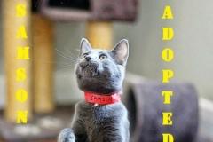 Samson - Adopted - November 3, 2017