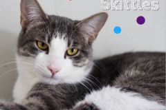 Skittles-Adopted-on-April-5-2020