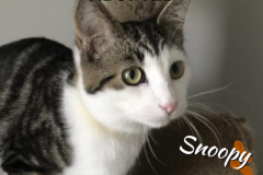 Snoopy-Adopted-on-February-1-2020-with-Precious