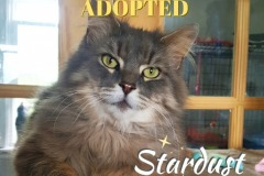 Stardust-Adopted-on-July-27-2019