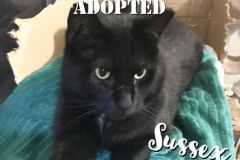 Sussex-Adopted-on-February-9-2020