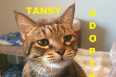 Tansy - Adopted - April 29, 2018 with Mr. Bates