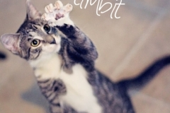 Timbit21