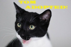 Tom - Adopted - October 5, 2018 with Jerry