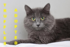 Truffles - Adopted - May 21, 2018