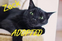 Zack - Adopted - October-15-2017