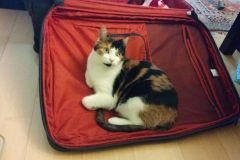 Angel-on-suitcase