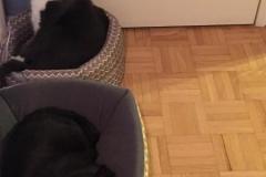 Blackie-Trixie-2020-12-25-1