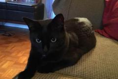 Blackie-Trixie-2020-12-25-2