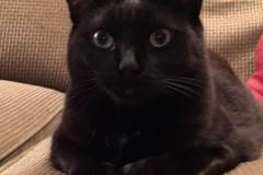 Blackie-Trixie-2020-12-25-4