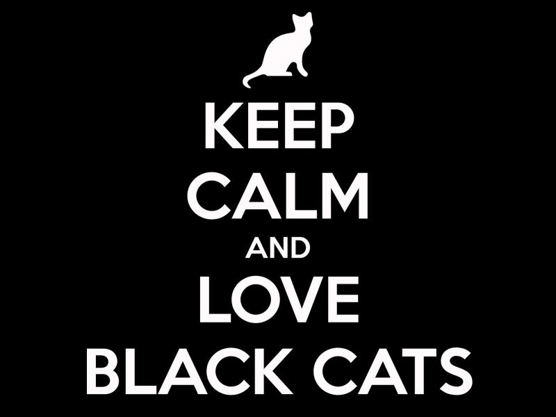 Black Cat Appreciation Day #1