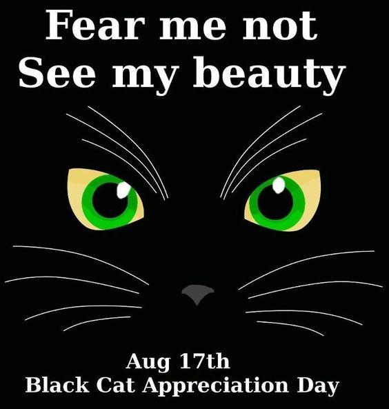 Black Cat Appreciation Day #2