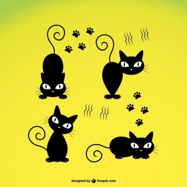 Black Cat Appreciation Day #3