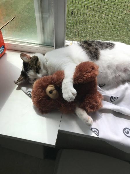 Harmony Holding Baby Bear