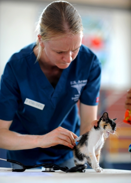 care-cat-doctor-263318