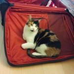 Angel on suitcase