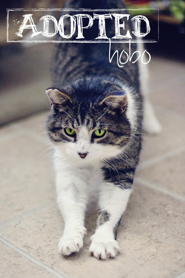 Hobo6