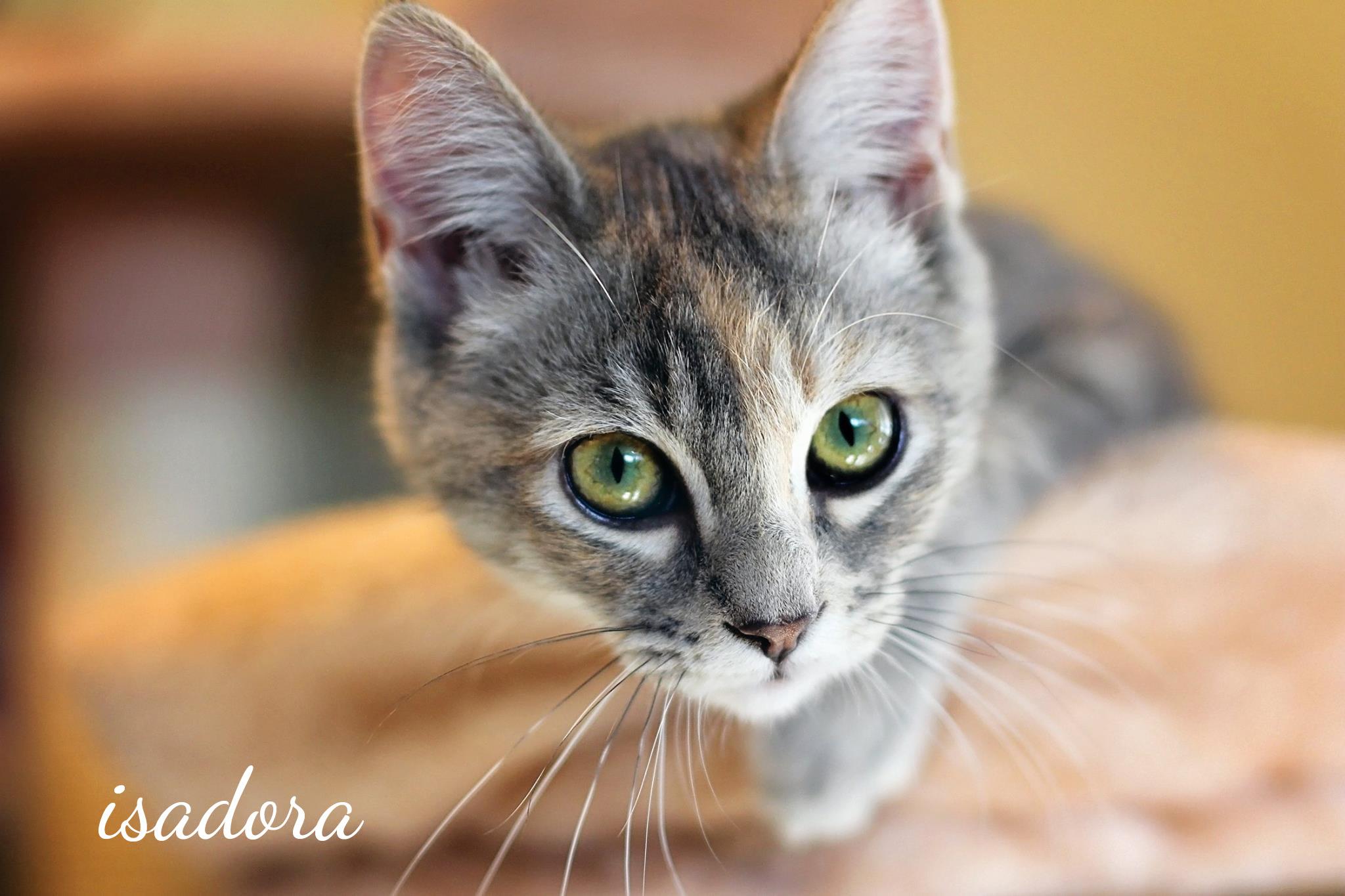 Isadora1