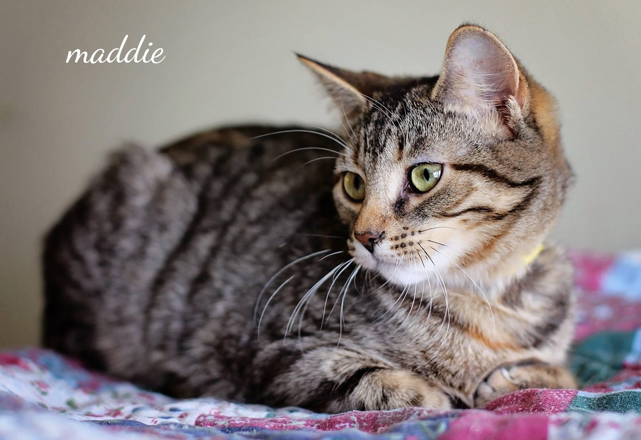 Maddie2