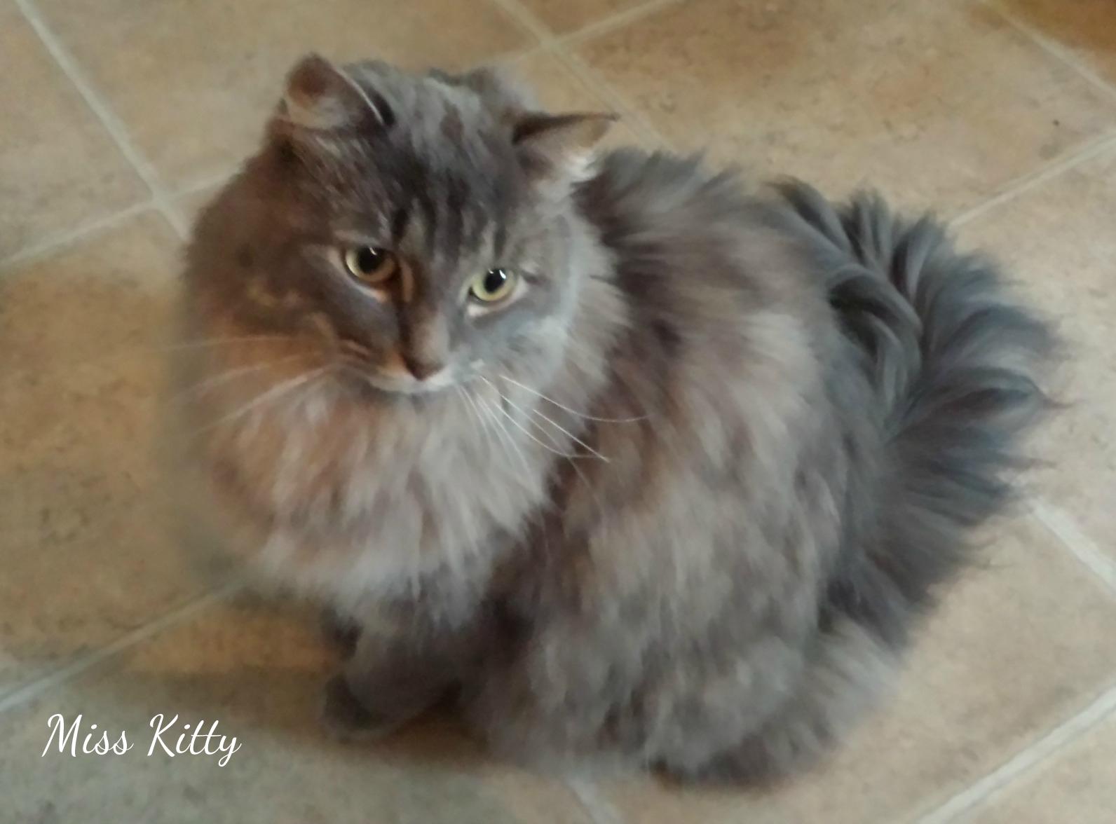 Ms-Kitty-edited