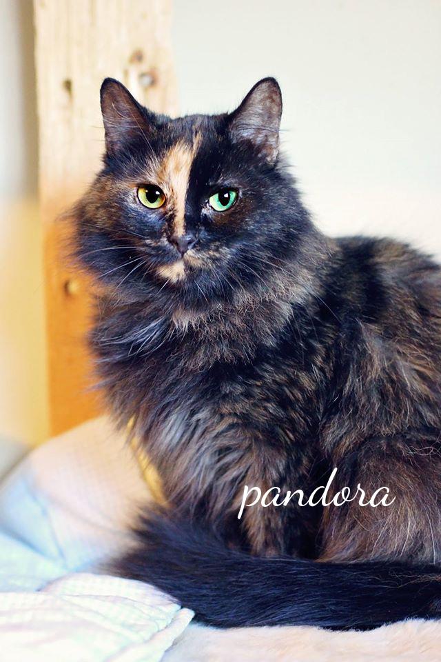 Pandora1
