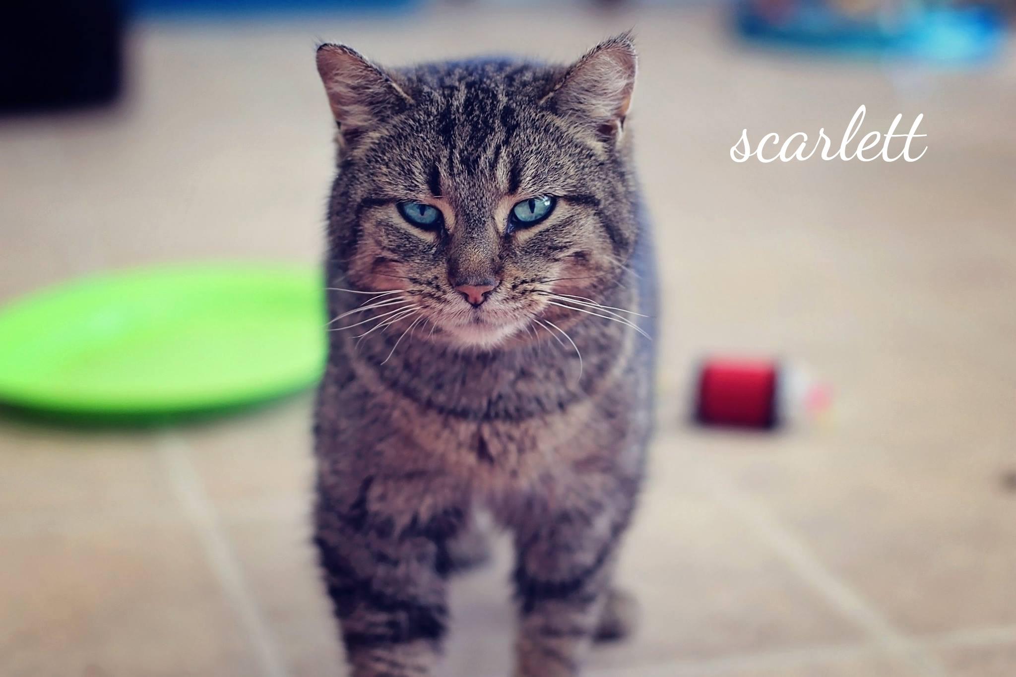 Scarlett3