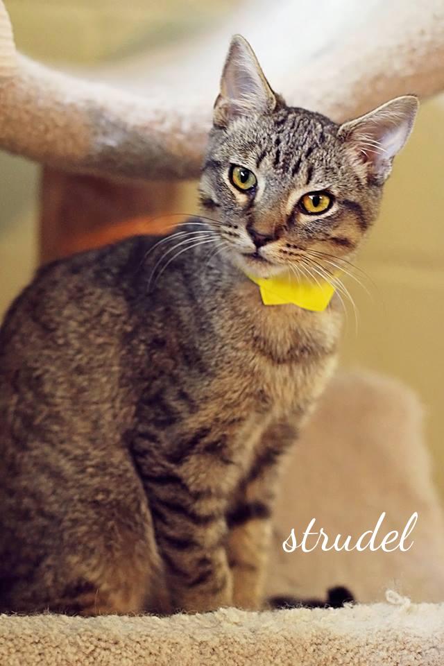 Strudel1