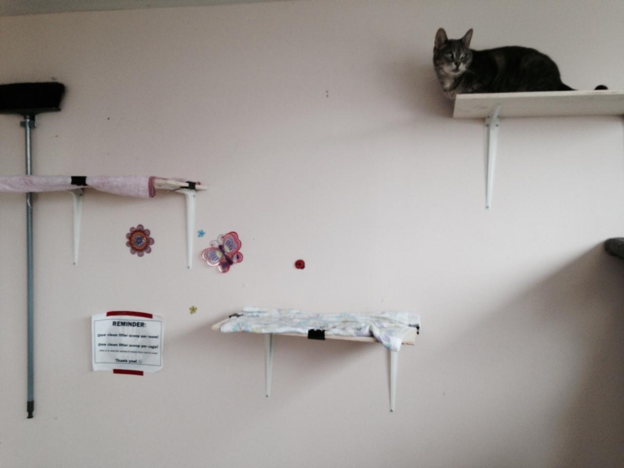 ... Frosty Cat On Shelf