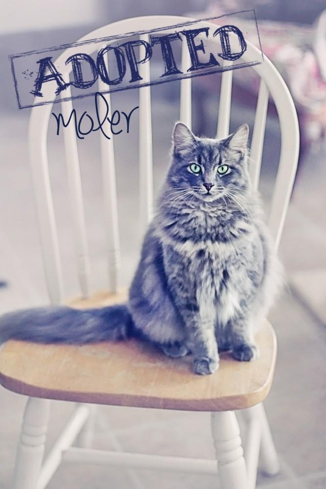 moler3