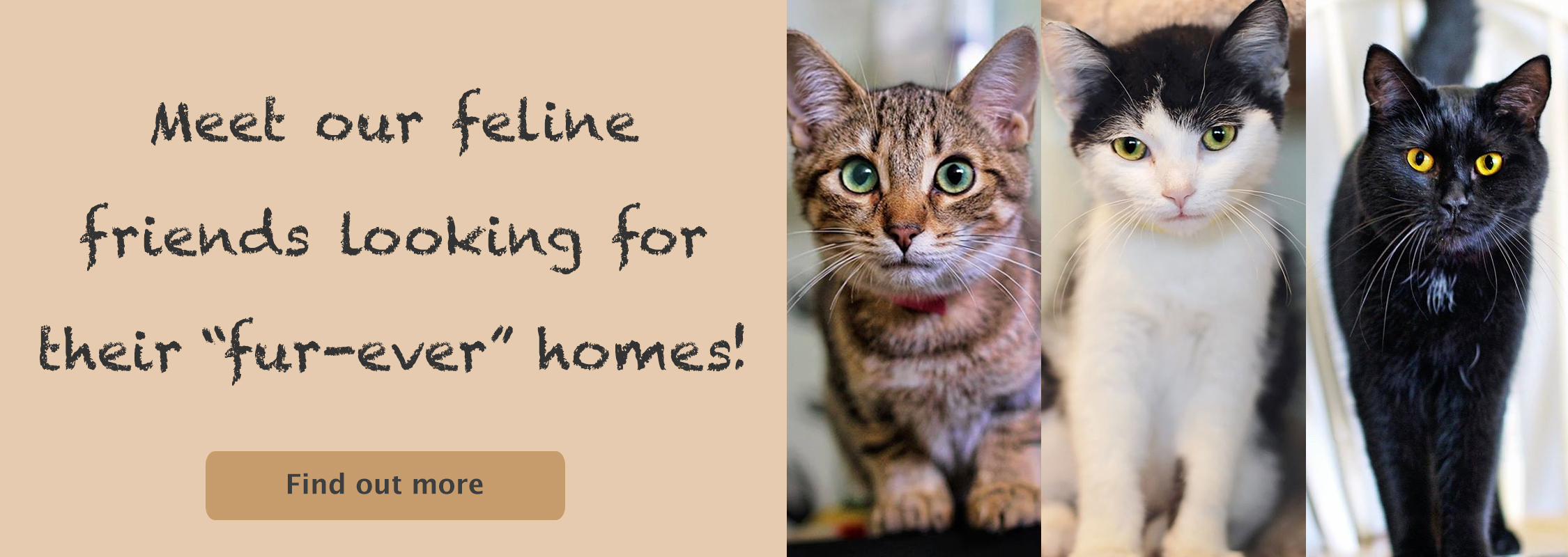 Looking for fur-ever homes!