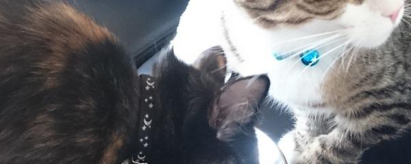 Athena (Taylor) & Nyx (Purcilla)