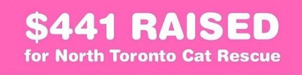 $441 Raised for North Toronto Cat Rescue!!!